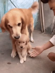 Do not touch my son, better take my paw
