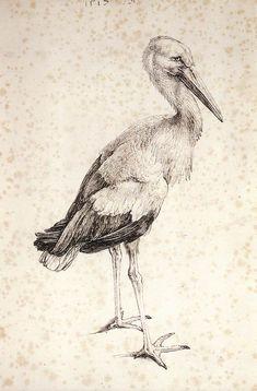 Albrecht Dürer ~ The Stork, 1515