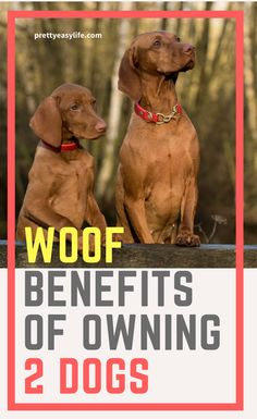 Owning two dogs is way easier than what you think and a lot of fun! #owning two dogs #two dogs your life