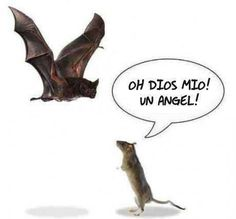 "An angel!"" Rat mouse bat rat with wings angel rat humor funny . Funny Rats, Hilarious, It's All About Perspective, Spanish Humor, Spanish Sayings, Frases Humor, Humor Grafico, Just For Laughs, Best Funny Pictures"