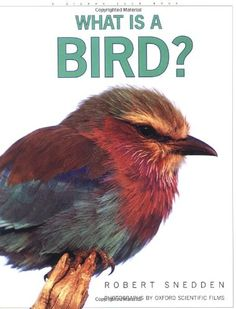 What is a Bird? by Robert Snedden http://www.amazon.com/dp/0871569221/ref=cm_sw_r_pi_dp_uUbtub1P4VEPZ - Donated by Dunwoody Woman's Club