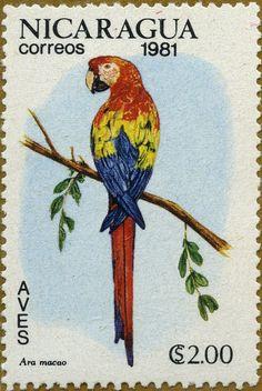 Aves exóticas Ara macao Guacamayo rojo 1981 Nicaragua