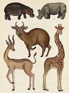 Animalium, Illustration by Katie Scott. Hoofed Mammals
