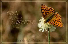 Posts about Christian Walk written by Cindy Garden Insects, Cycle Of Life, Bloom Blossom, Flora, Butterfly, Christian, Landscape, Feelings, World