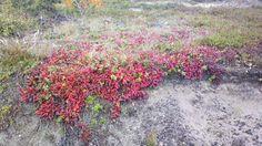 Colours Colours, Plants, Red, Plant, Planets