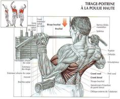 How to do/perform Lat-Pulldowns? Correct form of Lat-Pulldowns Go Fitness, Muscle Fitness, Fitness Nutrition, Fitness Shirts, Weight Training, Weight Lifting, Powerlifting Training, Body Building Tips, Muscle Building