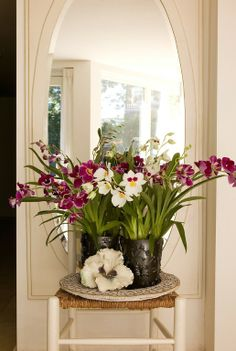 Different varieties of miltonia Miltonia Orchid, Phalaenopsis Orchid, Water Culture Orchids, Indoor Orchids, Wild Orchid, Different Flowers, Begonia, Flower Pictures, Cut Flowers