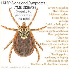Later signs and symptoms of lyme disease  #lyme #lymedisease
