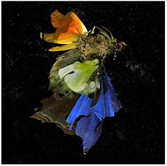 from Mat Collishaw's photographic Insecticide series which began in 2006.