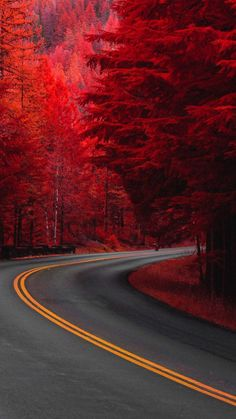 Pine Red Trees Road 4K Ultra HD Mobile Wallpaper