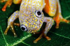 ITU LA PASAL: Frogs with beautiful Rainbow Colors