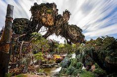 Photo: @jackcrousephoto FOLLOW! Check out this AMAZING shot of #VisitPandora by Jack Crouse! WOW! #WaltDisneyWorld #AnimalKingdom #Avatar #Pandora . . . . #WDW #Orlando #Disney #Disneyworld #instadisney #disneygram #igers_orlando #igers_disney #themepark  #disneyside #ilovedisney #disneyblogger #waltdisney #disneyparks #igers_wdw #disneylove #florida #disneyfan #love #instagood #followme