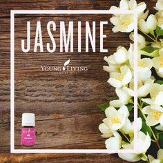 Young Living Essential Oils - Jasmine ---The sweet, romantic scent of Jasmine essential oil helps relax the mind and boost self-confidence. • Place a drop or two on your neck or temples. • Create an uplifting custom blend by mixing a combination of Jasmine, Bergamot, and Lavender in your favorite diffuser. • Support the health of your skin by adding a drop of Jasmine to a daily application of body lotion.