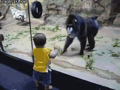 Humor gifs, gif funny, funny gifs animals ...For more hilarious gifs visit www.bestfunnyjokes4u.com/