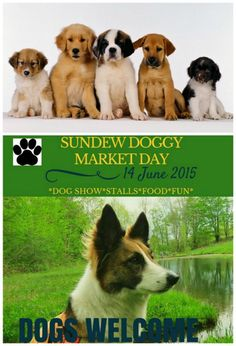 Sundew Doggy Market Day 14 June 2015 Dogs on leashes welcome, all for a good cause. Food, drink and all things dog. 14 June, Good Cause, Dog Show, Fleas, Best Dogs, Photo Editing, Corgi, Marketing, Drink