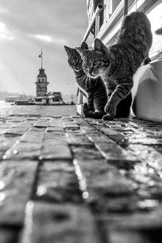 paisajes y gatos - Estambul