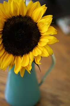 SUNFLOWER in a blue pitcher