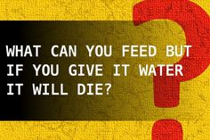 What can you feed but if you give it water it will die?