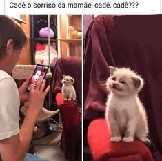 super cute - your daily dose of funny cats - cute kittens - pet memes - pets in clothes - kitty breeds - sweet animal pictures - perfect photos for cat moms Memes Estúpidos, Memes Status, Cat Memes, Funny Memes, Kittens Cutest, Cute Cats, Funny Cats And Dogs, Kawaii, Funny Art