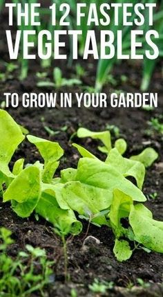 12 Fastest Growing Vegetables Not all vegetables take from spring from fall to mature. If you're getting a late start on your home garden or live in a region with a short growing season, fear not. There are many health… Veg Garden, Edible Garden, Lawn And Garden, Garden Plants, Vegetable Gardening, Indoor Garden, Rooftop Garden, Veggie Gardens, Gardening Vegetables