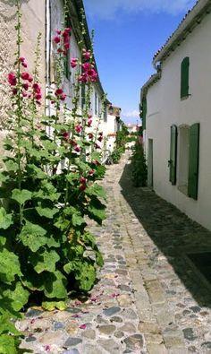 Une des rues que je prenais tous les jours en vélo pour aller bosser, les roses trémières ont pris cher