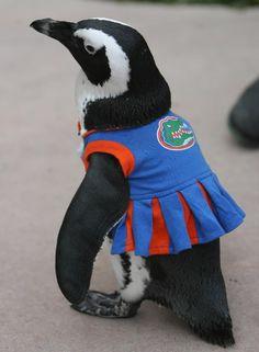 Florida Gators Penguin