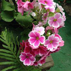 Flores de Colombia | Colombian flowers