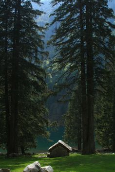Cabin & Huge trees at Lago di Cama (Cama lake), Graubunden, Switzerland Cabin In The Woods, Into The Woods, Little Cabin, Photos Voyages, Cabins And Cottages, Log Cabins, Belle Photo, The Great Outdoors, Nature Photography