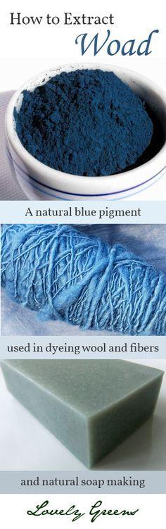Extraction pigment bleu naturel à partir des feuilles de la plante de guède.  Le pigment a été traditionnellement utilisé pour teindre la laine, mais il peut également être utilisé dans la coloration naturelle du savon.