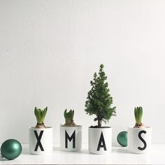 An easy and decorative Christmas decoration. In AJ Vintage ABC porcelain cups. Nordic Christmas, Christmas Design, Winter Christmas, Christmas Time, Christmas Ideas, Miniature Christmas Trees, Christmas Flowers, Winter Flowers, Christmas Editorial