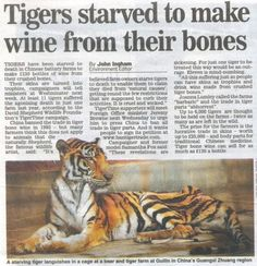 article on stop cruelty against animals