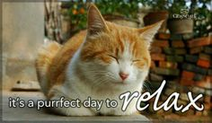 ..purrfect day to relax
