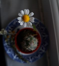 Living In New York, Flowers In Hair, Daisy, Tableware, Beautiful, Bracelet, Chain, Usa, Gold