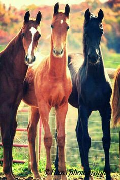 horse grouping, horse faces,, horse with ears up, HorsewasMyFirstWo… – Tiere… – Art Of Equitation Baby Horses, Cute Horses, Wild Horses, All The Pretty Horses, Beautiful Horses, Animals Beautiful, American Saddlebred, Horse Photos, Horse Pictures
