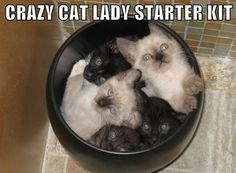 SOOOO many people have sent this to me lately, my future as a crazy cat lady is inevitable.