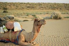 Souvenir de notre séjour en Inde - Copyright Marine Aldahdah