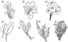 Foraging for Lunch: 1. Purslane (Portulaca oleracea) 2. Miner's Lettuce (Claytonia perfoliata) 3. Wild Arugula (Eruca sativa) 4. Dandelion Greens (Taraxacum officinale) 5. Chicory (Cichorium intybus) 6. Sorrel (Rumex acetosa) 7. Watercress (Nasturtium officinale)