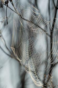 Toile d'araignée - photo de V.Brosseau                              …