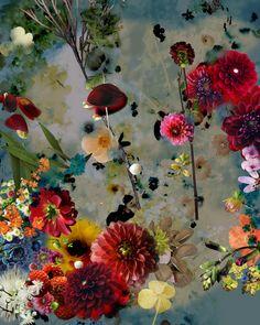 Flowers by Isabelle Menin Art Floral, Motif Floral, Botanical Art, Pretty Pictures, Flower Art, Flower Arrangements, Beautiful Flowers, Art Photography, Illustration Art