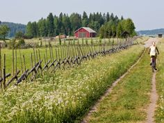 A Finnish country scene! Photo by Hannu Laatunen // Vastavalo Helsinki, Finland Summer, Good Neighbor, Country Scenes, Public Transport, Railroad Tracks, Countryside, Sustainability, Journey