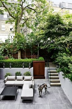 Small Urban Garden Design Ideas And Pictures. Grate yard down to one level...stairs down to it.