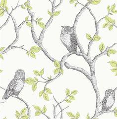 vogel uilen boom takken natuur behang xx9