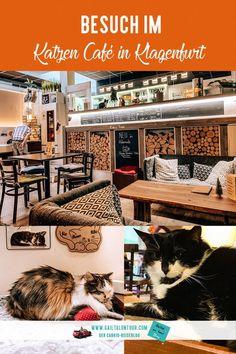 Besuch im #Katzencafé. Warum du unbedingt einmal dieses außergewöhnlliche #Kaffeehaus besuchen solltest und was du noch alles in #Klagenfurt in der Weihnachtszeit erleben kannst, erfährst du in diesem Artikel.