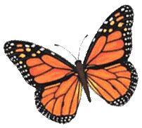 mariposa monarca punto cruz esquema - Buscar con Google