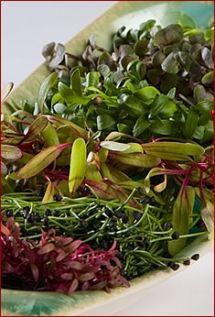 Microgreens - Farming Turtles Grow microgreens at home!