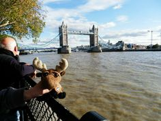 Mr. Moose at the famous Tower Bridge.