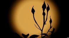E igualmente en Los Ángeles fue captada esta imagen de un rosal reflajado en la Luna.