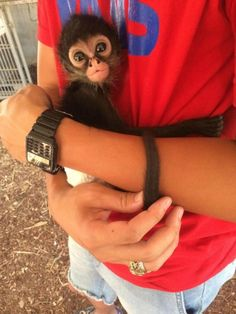 adorable little monkey hugging a man