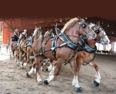 bucket list: drive a 6 horse driving team
