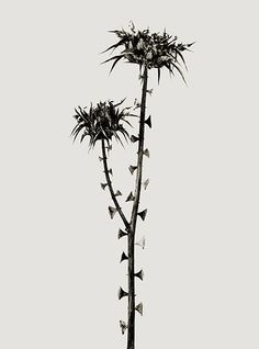 Loved seeing this piece! Braohypoda Frustrata from the Herbarium series by Joan Fontcuberta, 1984. Science Museum exhibition Joan Fontcuberta: Stranger Than Fiction